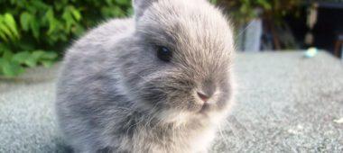 Как нужно ухаживать за декоративным кроликом в домашних условиях?