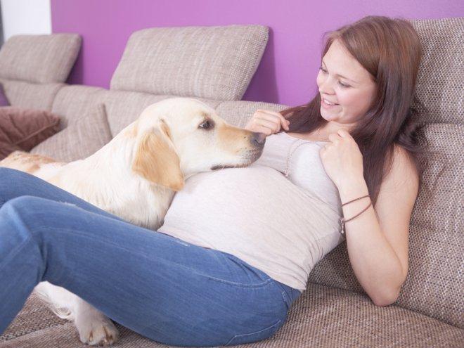 Быть беременной животным во сне