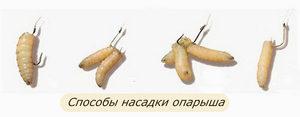 oparysh-universalnaya-primanka-dlya-udachnogo-ulova1